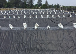水产养殖HDPE防渗膜